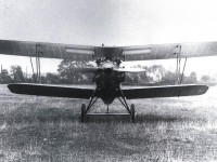 GLOSTER GAMECOCK